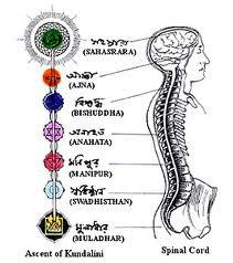 Chakra & spinal column